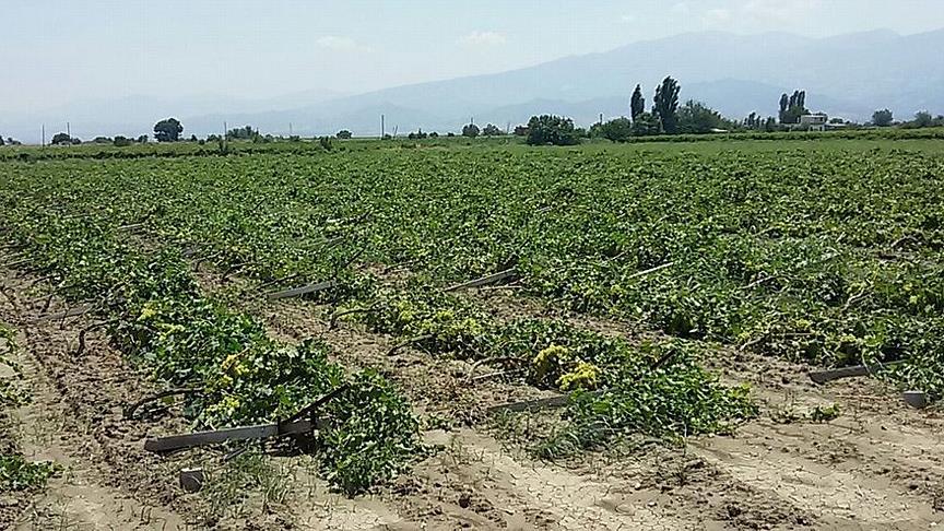 Beykoz'un Tarım Gücü Meydan Okuyor!
