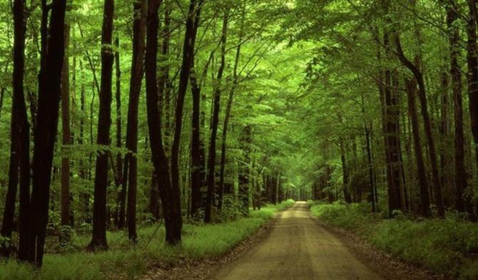 Beykoz Ormanları, Ekoloji Öğrencilerini Ağırladı!