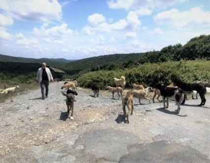 Diğer ilçelerden Beykoz'a hayvanlar bırakılıyor!