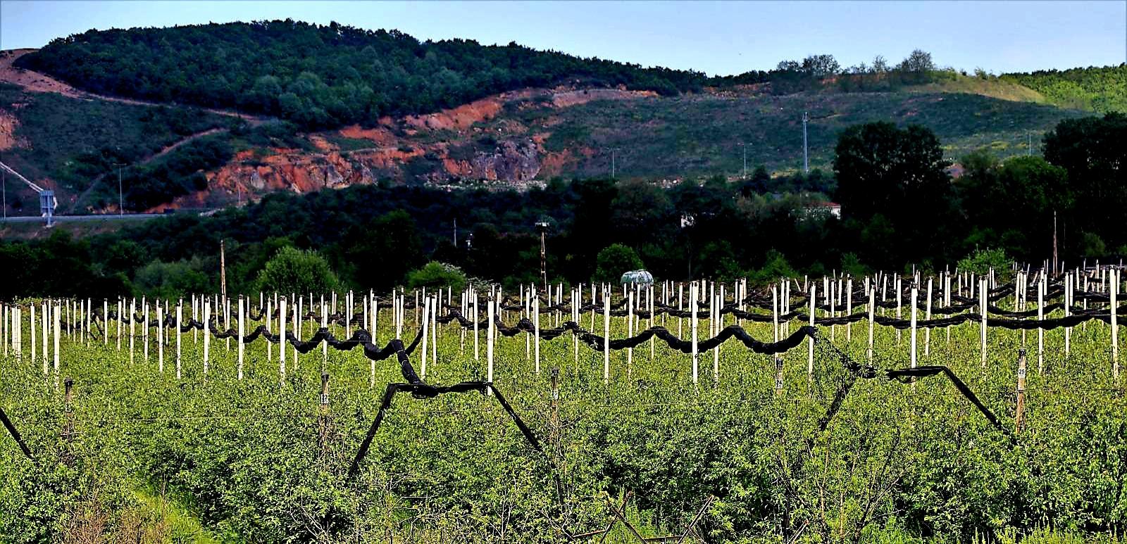 Beykoz'da alım garantili tarım hayata geçecek mi?