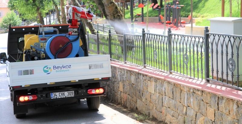 Beykoz'da sivrisinek: Kültürel mücadele yapılıyormuş!