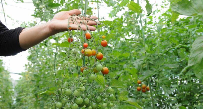 Beykoz'da doğayı besleyecek ürün