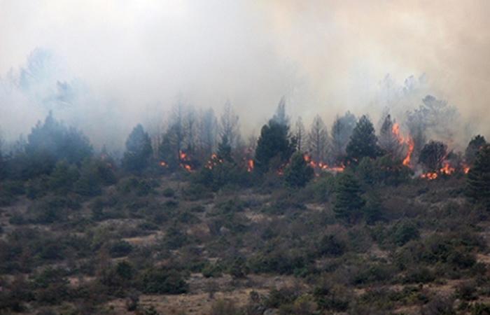 Beykoz ormanları yanıyor: Şimdide Mahmut Şevket Paşa!