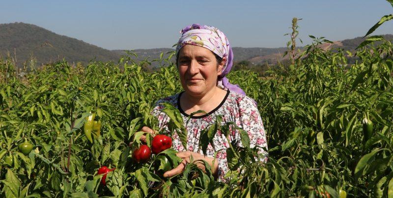 Beykoz'un kadın çiftçilerinin gururlandıran mücadelesi