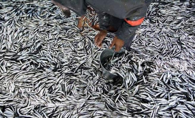 Beykoz'da hamsi avı yasaklandı