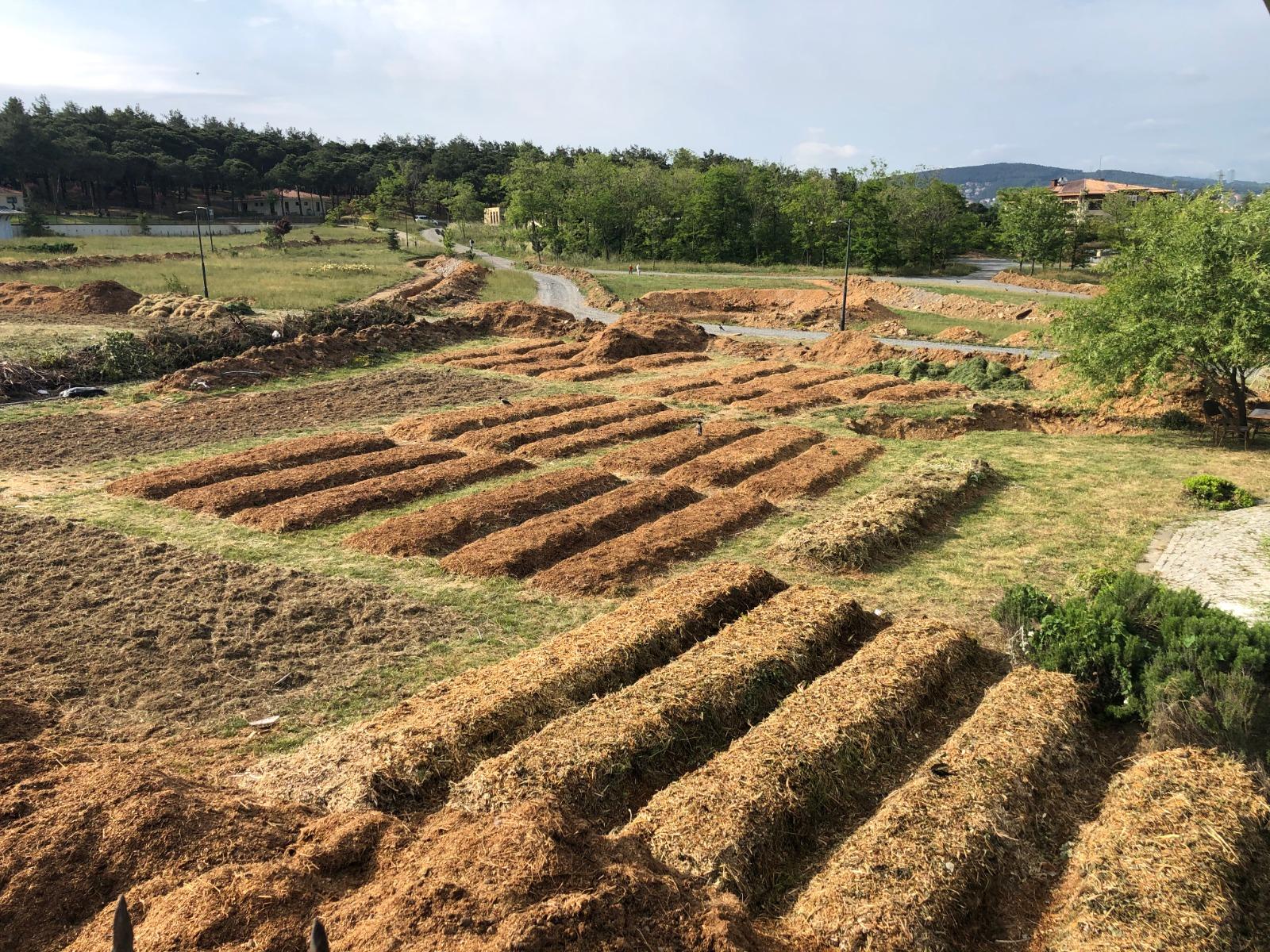 Beykoz'da ekolojik park için kollar sıvandı